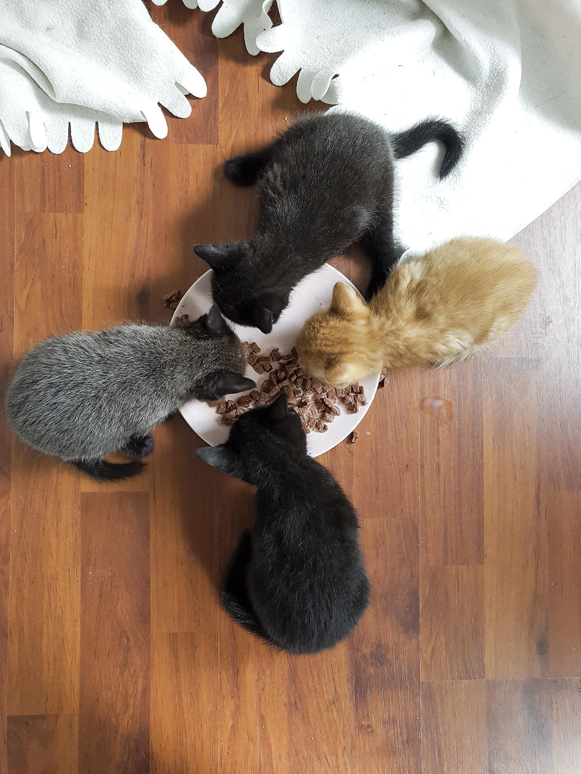Iedereen aan het vaste voer, behalve Muis!