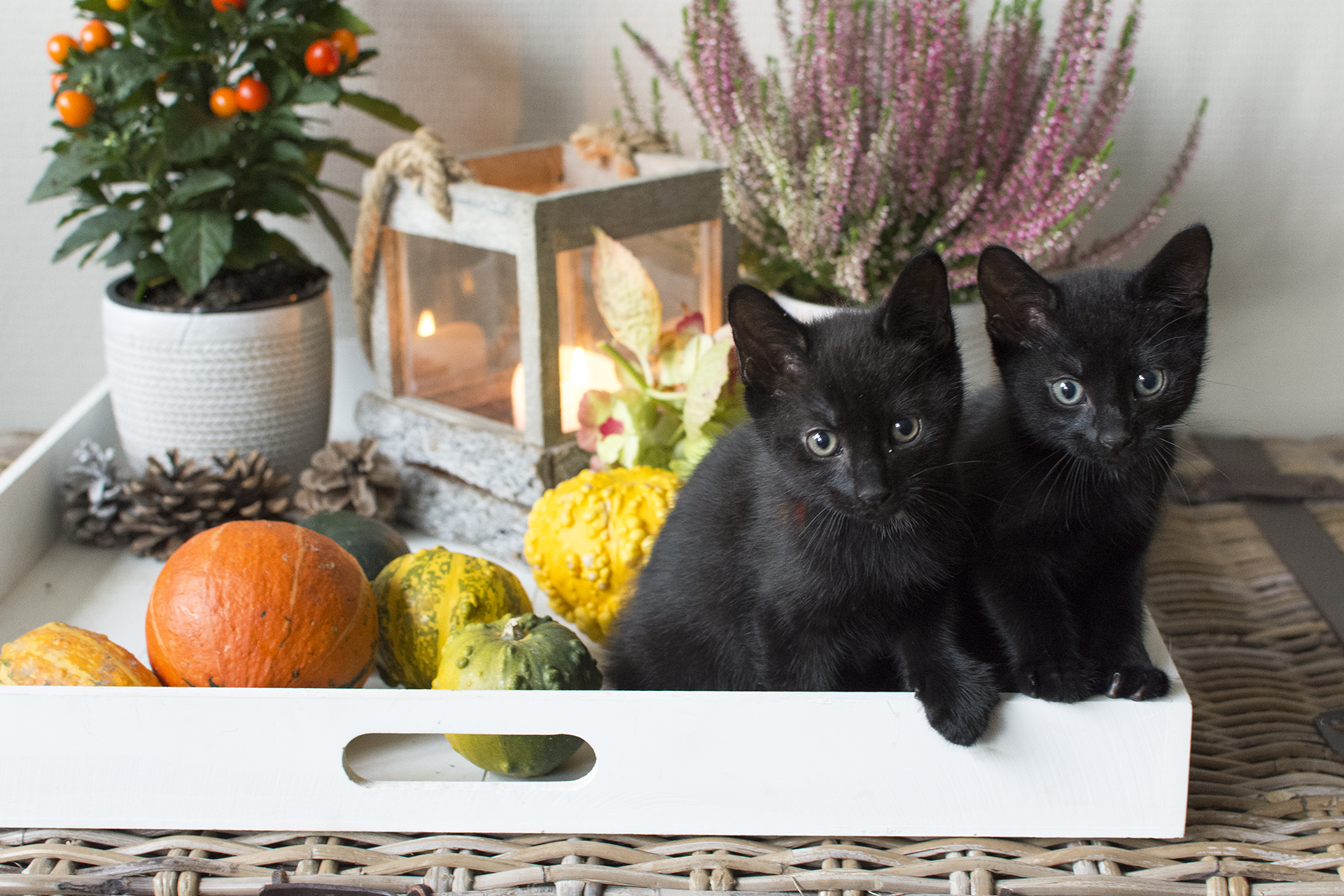 kittens17