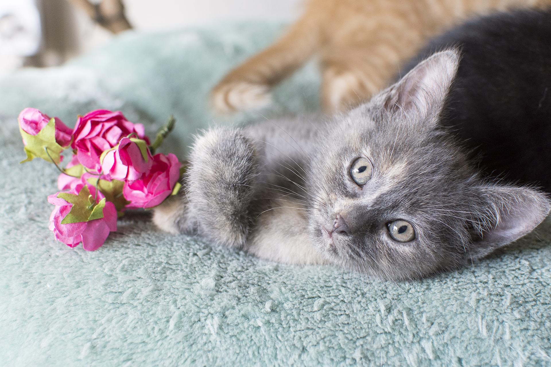 kittens8