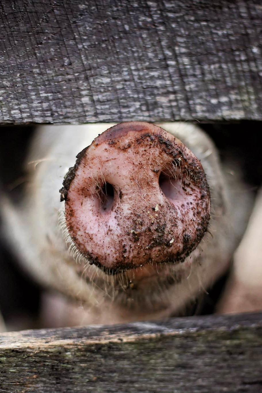 Waarom zouden we minder vlees moeten eten?