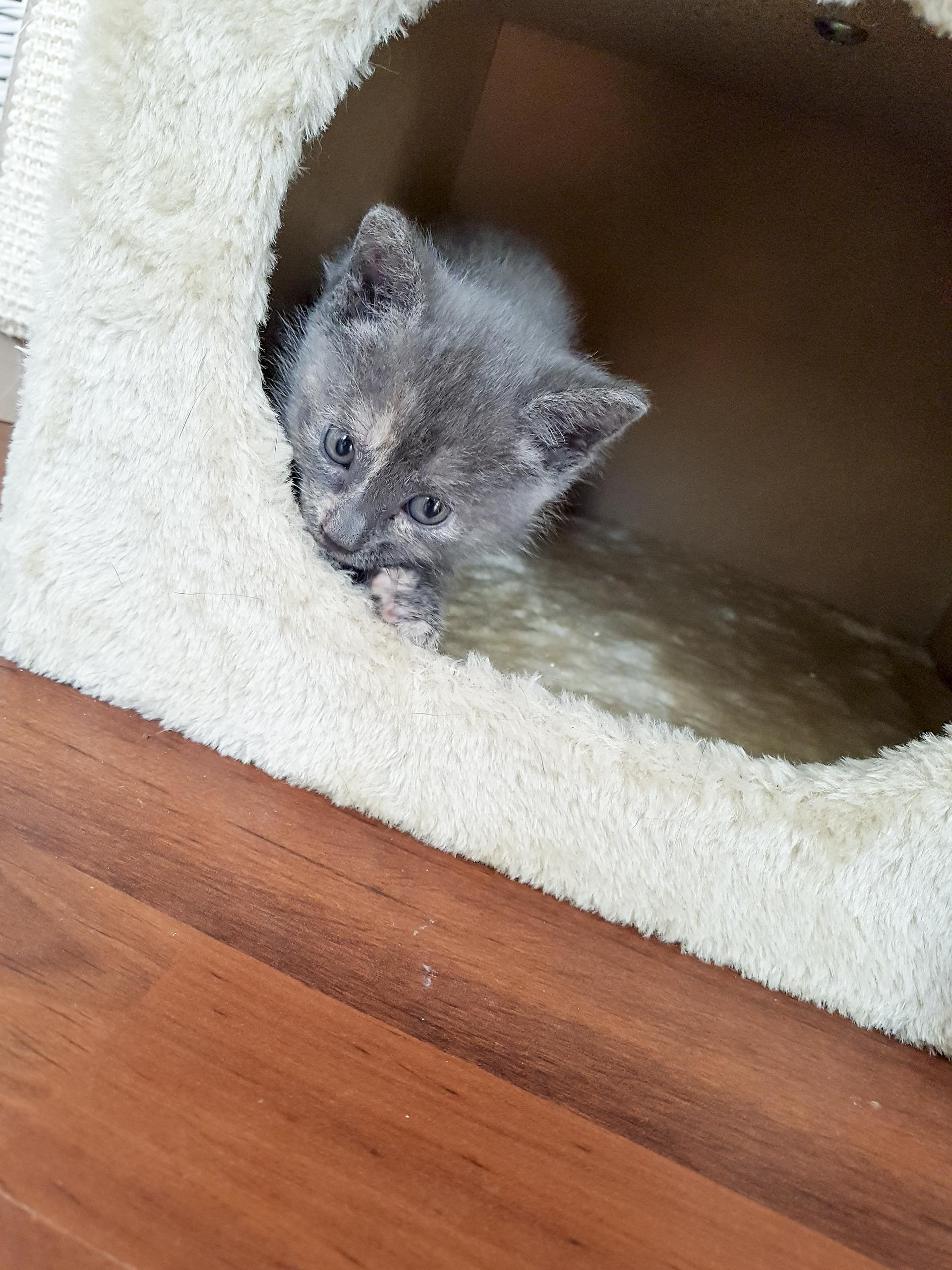 Ondertussen verstopt Muis zich voor het voer :p
