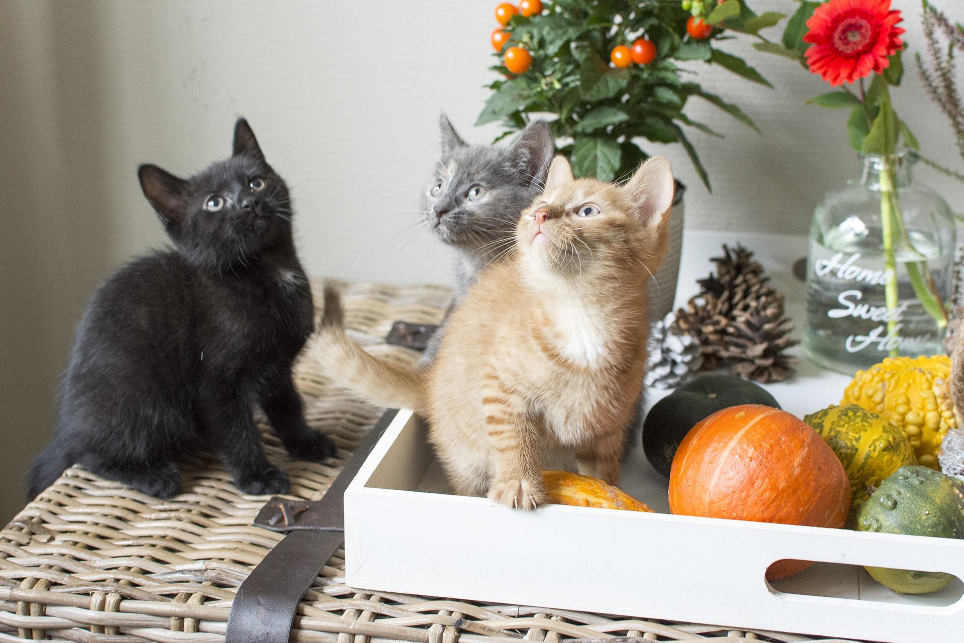 kittens12