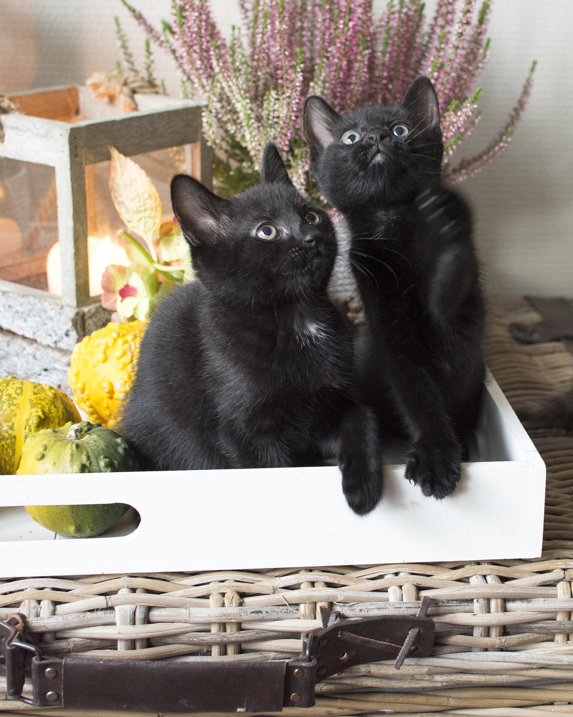 kittens16